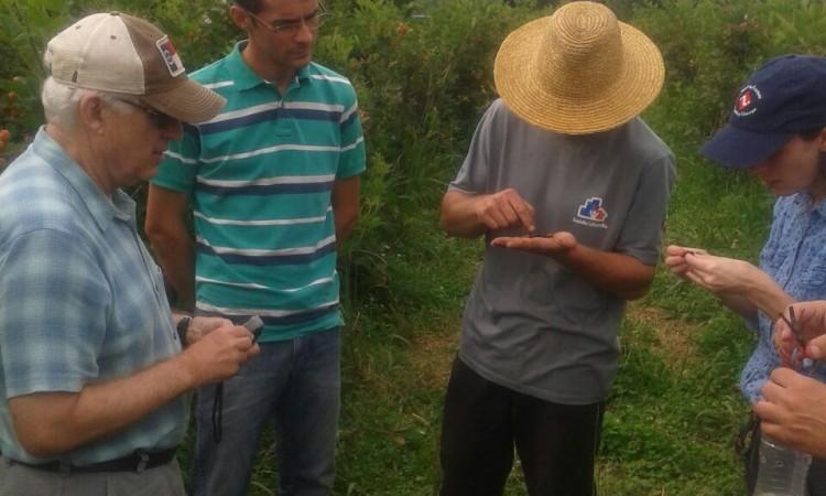 Pesquisadores norte americanos visitam pomares de pequenas frutas no interior de Vacaria