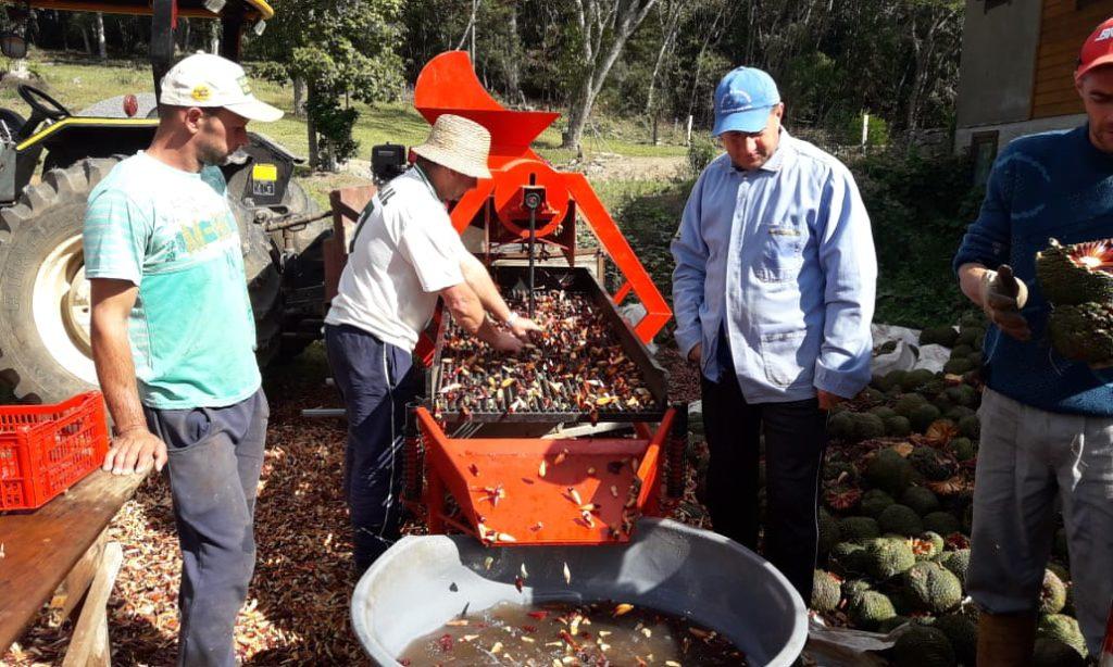 Fortalecimento dos grupos nas atividades extrativistas e de aproveitamento do pinhão