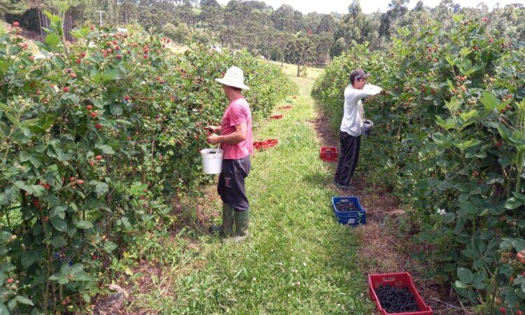 25 de maio Dia do Trabalhador Rural